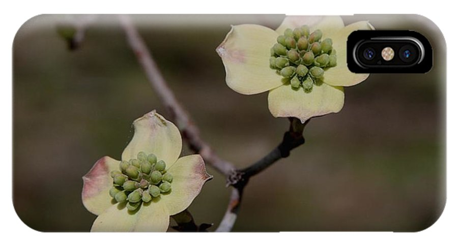 Dogwood IPhone X Case featuring the photograph Dogwood Blossoms by Cathy Lindsey