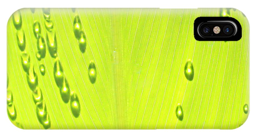 Green IPhone X Case featuring the photograph Early Morning Sunlight by Kume Bryant