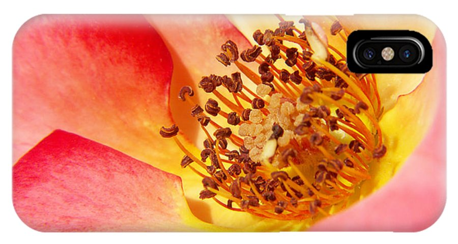Photography IPhone X Case featuring the photograph Gentle Breeze by Jackie Farnsworth