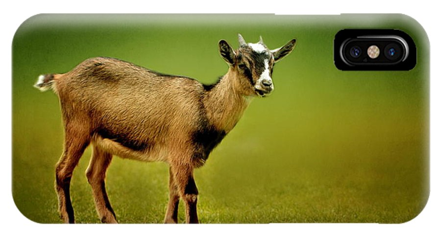 Animal IPhone X Case featuring the photograph Goat by Heike Hultsch