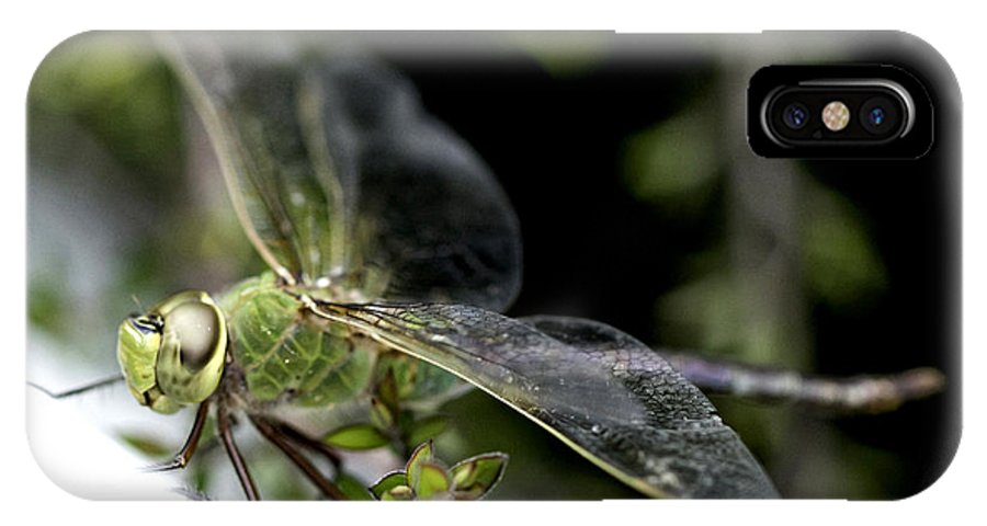 Dragonfly IPhone X Case featuring the photograph Green Dragonfly by Betty Depee