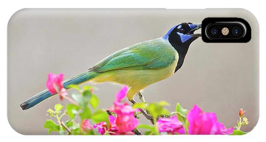 Bird IPhone X Case featuring the photograph Green Jay (cyanocorax Yncas by Larry Ditto