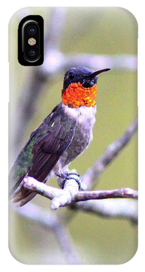 Hummingbird IPhone X Case featuring the photograph Hummingbird by Travis Truelove