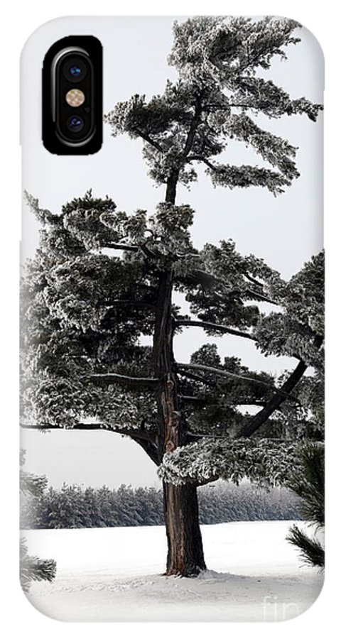 Tree IPhone X Case featuring the photograph Ice Storm by Sophie Vigneault