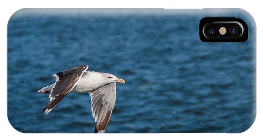 Bird IPhone X Case featuring the photograph In Flight by Gaurav Singh