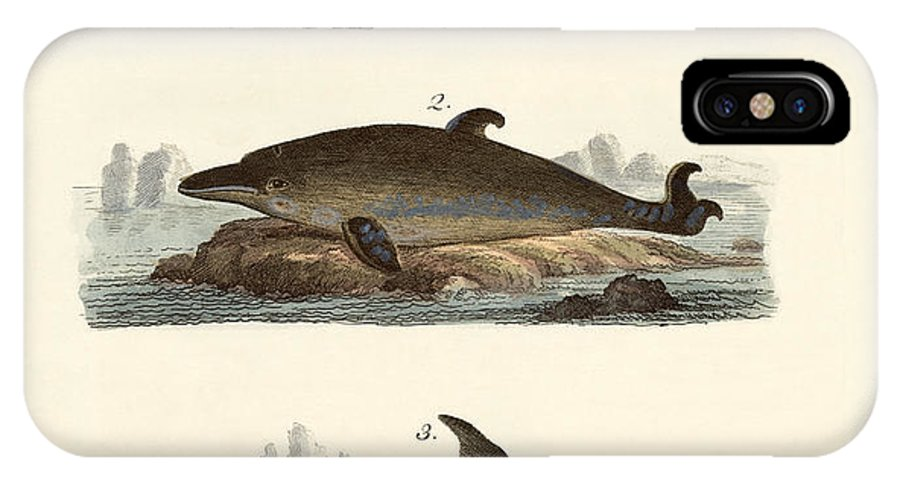 Harbour Porpoise IPhone X Case featuring the drawing Kinds Of Whales by Splendid Art Prints