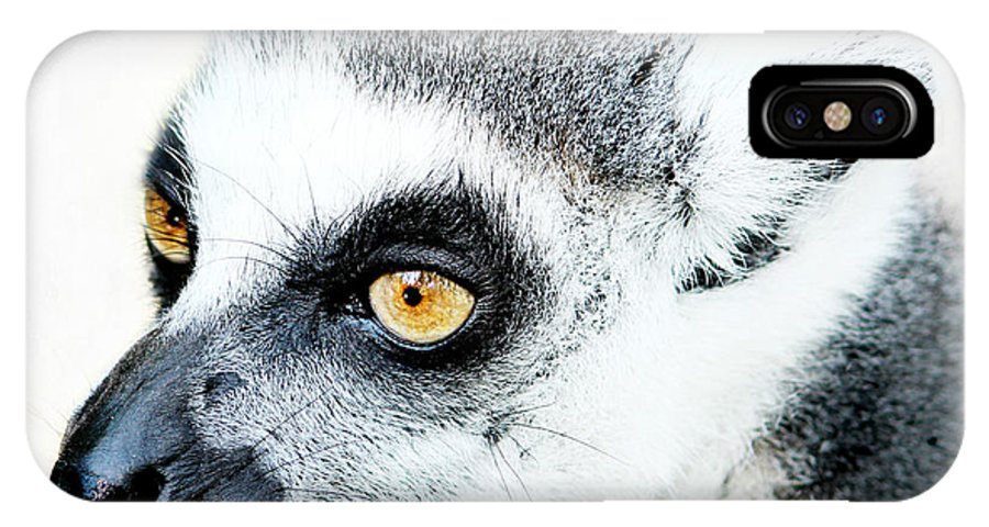 Animal IPhone X Case featuring the photograph Lemur by Heike Hultsch