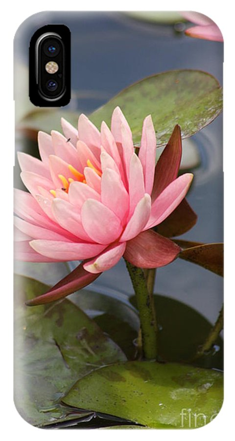 Waterlily IPhone X Case featuring the photograph Look At Me by Christiane Schulze Art And Photography