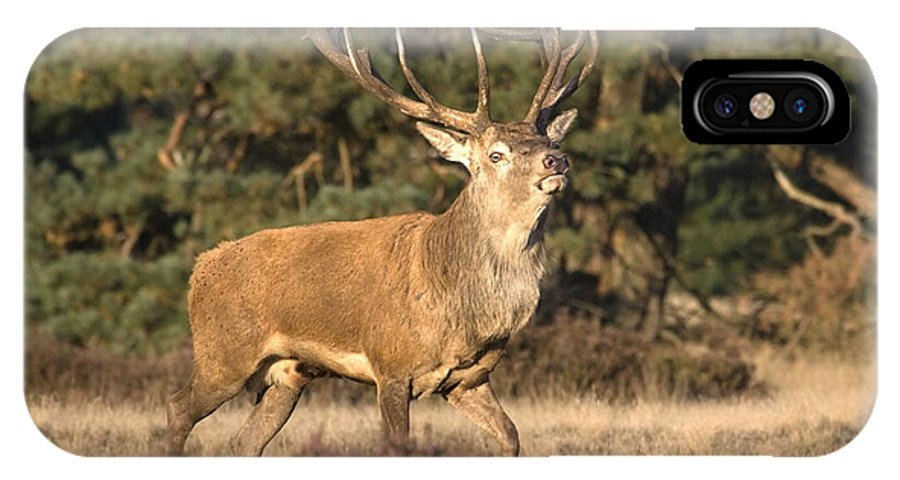 Male Red Deer IPhone X Case featuring the photograph Male Red Deer During Rut by Ronald Jansen
