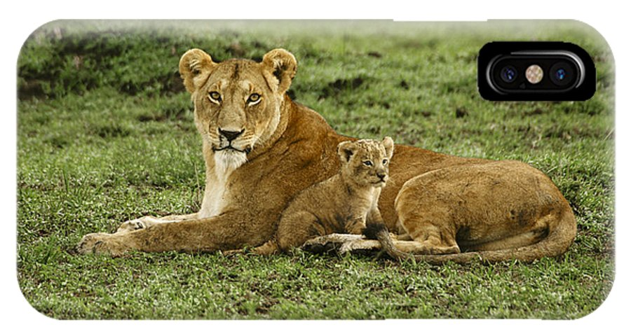 Lion IPhone X Case featuring the photograph Mama's Little Baby by Michele Burgess