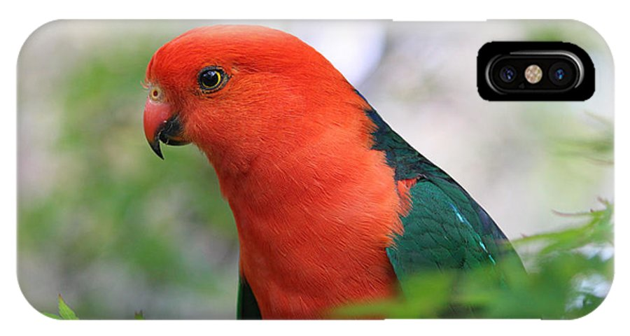 Parrot IPhone X Case featuring the photograph Parrot by Geoffrey Coombe