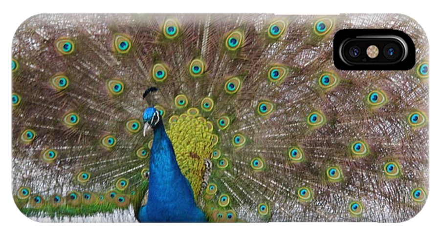 Peacock IPhone X Case featuring the photograph Peacock by J a Wood