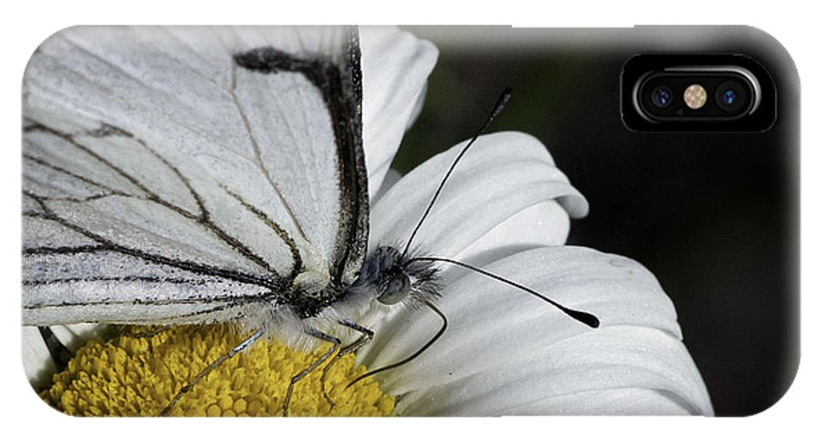 Pine White IPhone X Case featuring the photograph Pine White Butterfly by Betty Depee