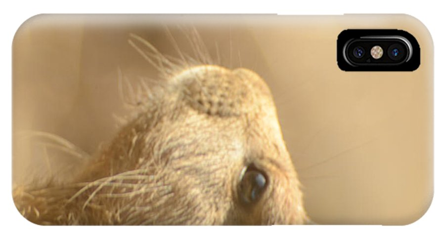 Animal IPhone X Case featuring the photograph Prairie Dog by Randy J Heath