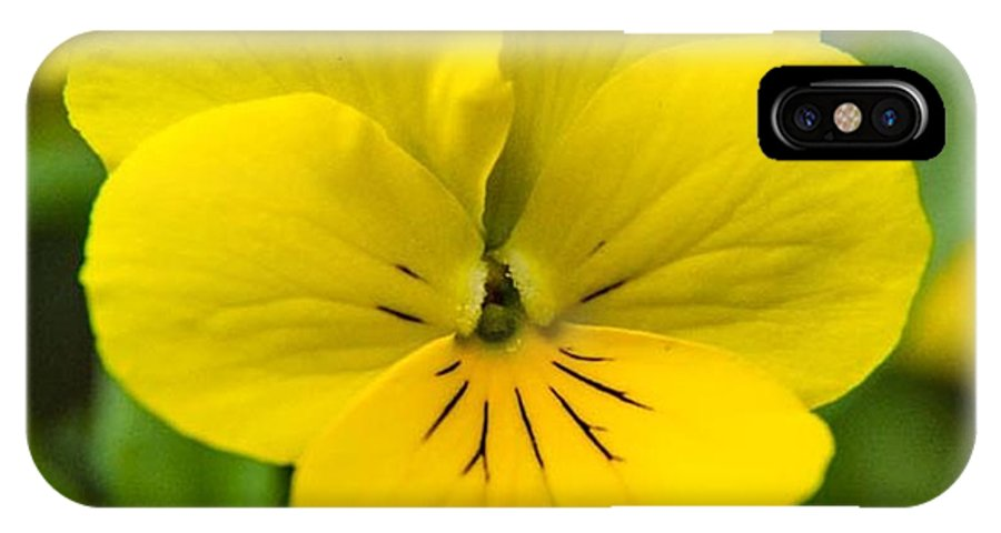 Yellow Pansies IPhone X Case featuring the photograph Purity by Terry Matysak