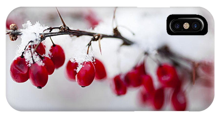 Berries IPhone X Case featuring the photograph Red Winter Berries Under Snow by Elena Elisseeva