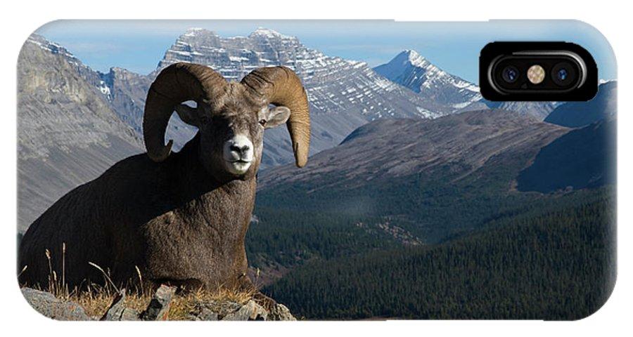 Alberta IPhone X Case featuring the photograph Rocky Mountain Bighorn Sheep Ram by Ken Archer
