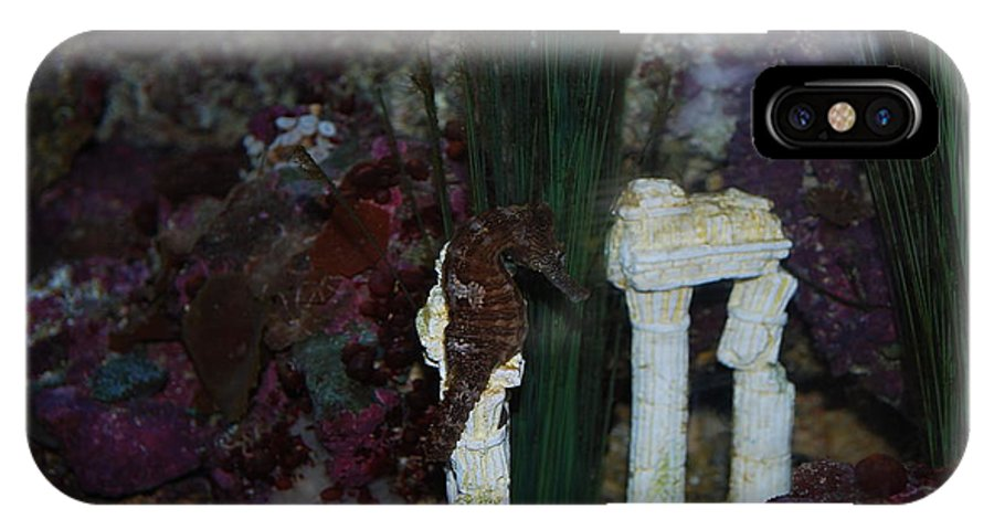 Taken Through Side Of Aquarium IPhone X Case featuring the photograph Seahorse by Robert Floyd