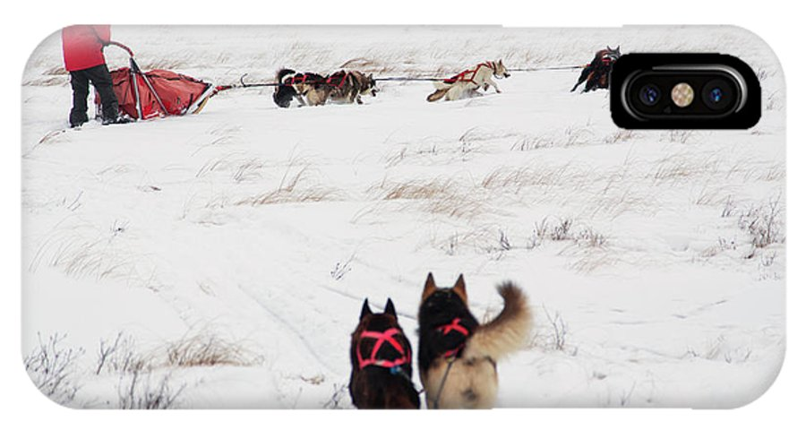 Horizontal IPhone X Case featuring the photograph Sled Dog by Tom Lynn