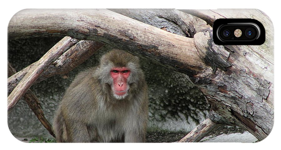 IPhone X Case featuring the photograph Snow Monkey by Karla Corbin