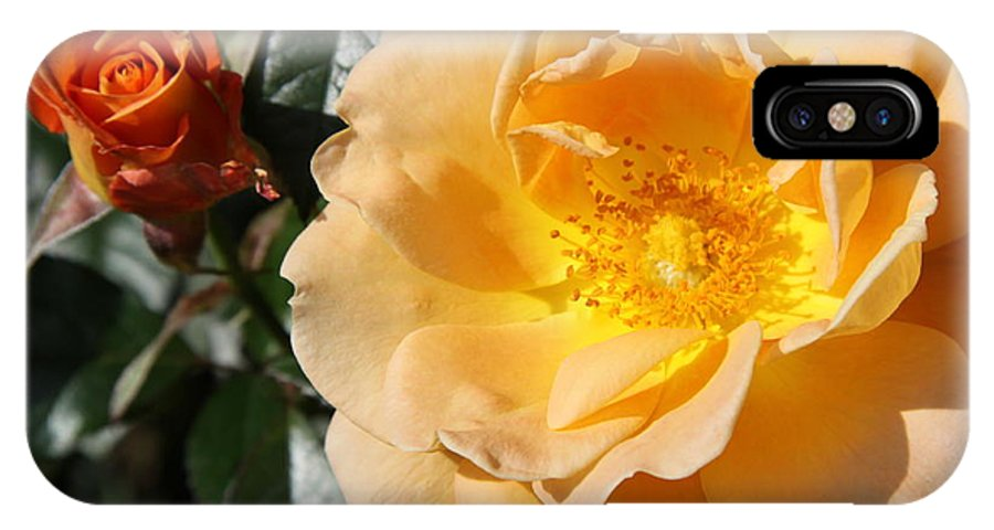 Rose IPhone X Case featuring the photograph Summer's Rose Love by Christiane Schulze Art And Photography