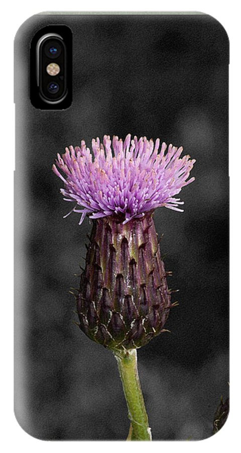 Thistle IPhone X Case featuring the photograph Thistle by WB Johnston