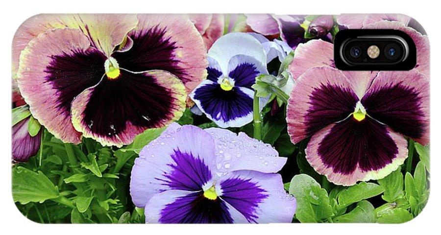 Viola IPhone X Case featuring the photograph Viola 'coastal Sunrise' Flowers by D C Robinson