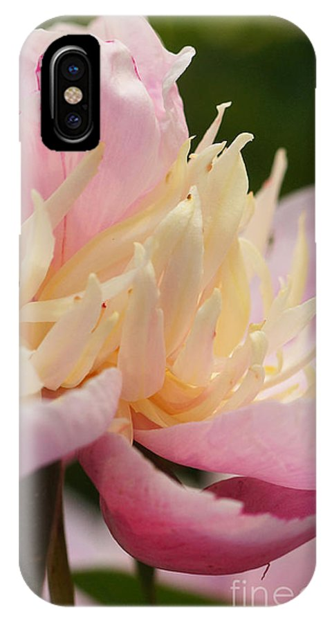Flora IPhone X Case featuring the photograph White And Pink Peony by Rudi Prott