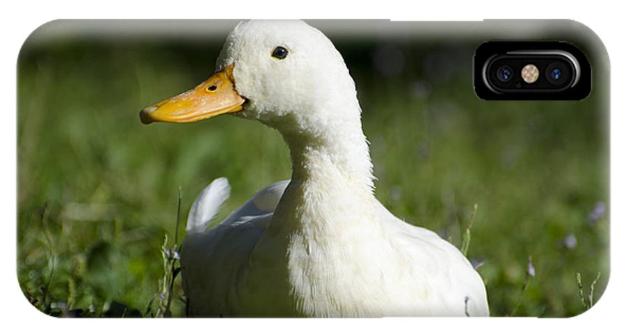 Duck IPhone X Case featuring the photograph White Duck by Mats Silvan