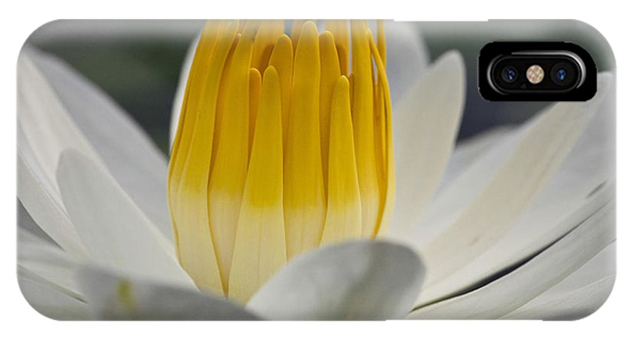 Water Llilies IPhone X Case featuring the photograph White Water Lily by Heiko Koehrer-Wagner