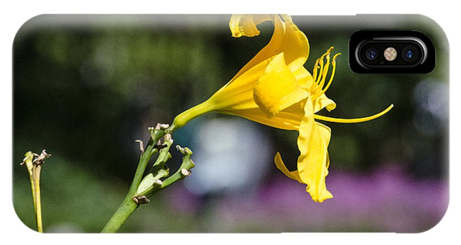 Flower IPhone X Case featuring the photograph Yellow Hibiscus by Pravine Chester
