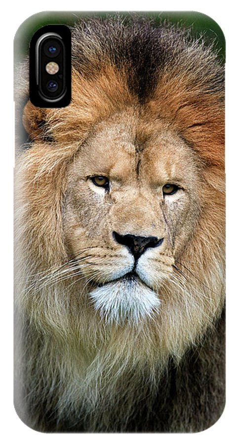 Adult IPhone X Case featuring the photograph Lion Dafrique Panthera Leo by Gerard Lacz