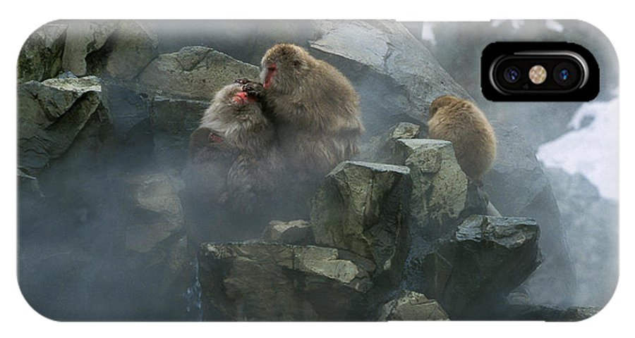 Adult IPhone X Case featuring the photograph Macaque Du Japon Macaca Fuscata by Gerard Lacz