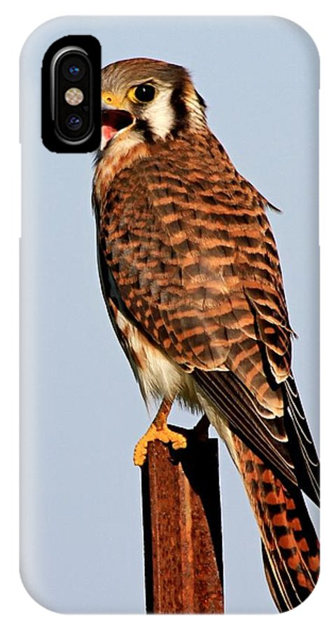 Falcon IPhone X Case featuring the photograph American Kestrel by Ira Runyan