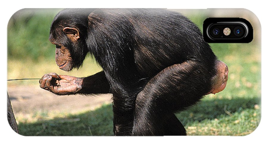 Adult IPhone X Case featuring the photograph Chimpanze Pan Troglodytes by Gerard Lacz