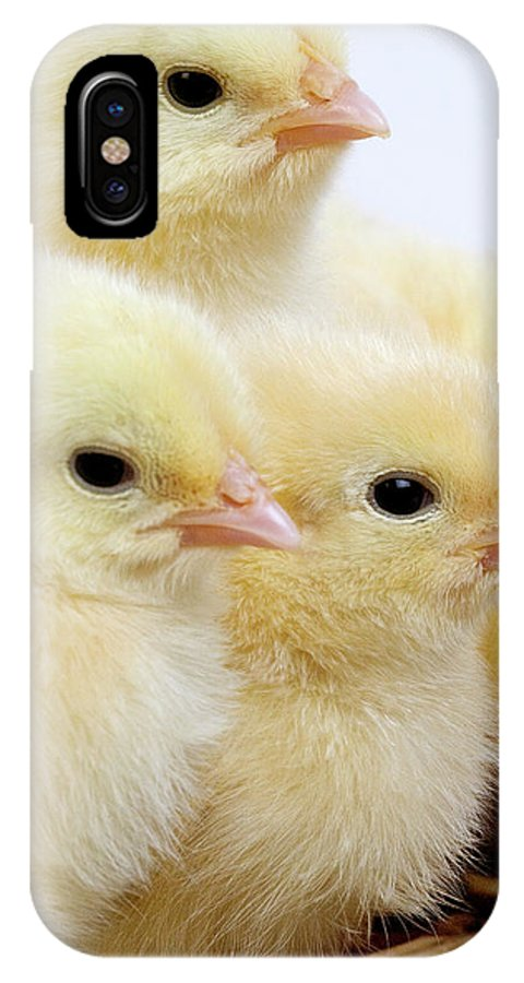 Agriculture IPhone X Case featuring the photograph Poussin by Gerard Lacz