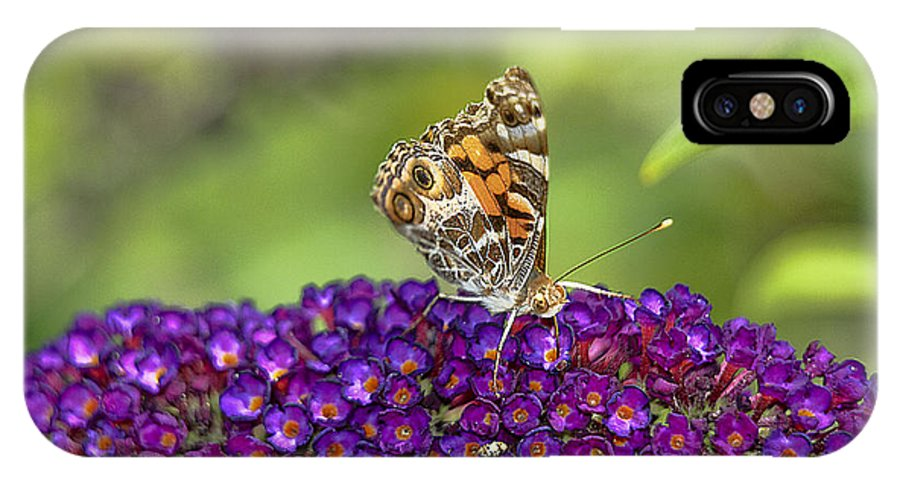 Butterfly IPhone X Case featuring the photograph American Painted Lady by Geraldine Scull