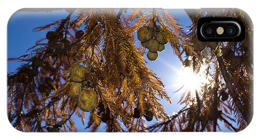 Coniferous IPhone X Case featuring the photograph Autumn Coniferous by Mats Silvan