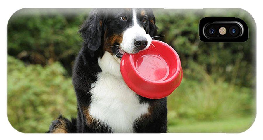 Bernese Mountain Dog IPhone X / XS Case featuring the photograph Bernese Mountain Dog by John Daniels