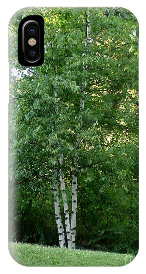 Arbor IPhone X Case featuring the photograph 3 Birch Trees On A Hill by Kerri Mortenson