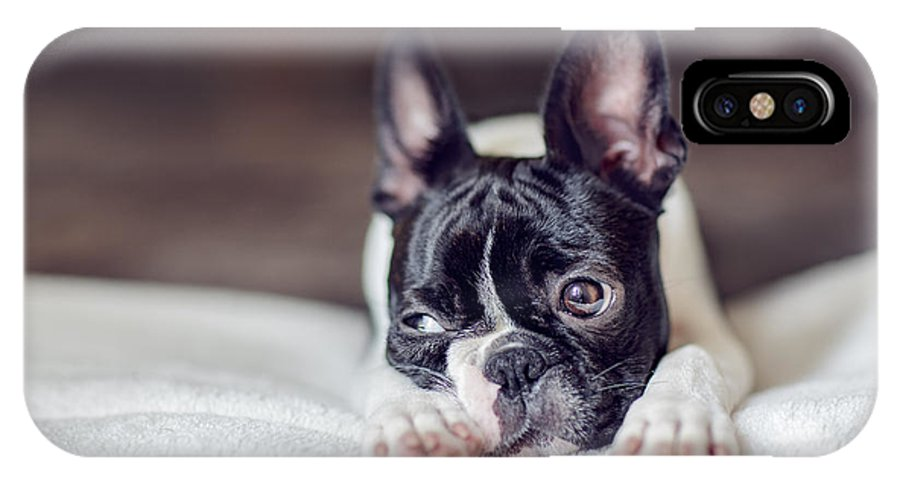 Cute IPhone X Case featuring the photograph Boston Terrier Puppy by Nailia Schwarz