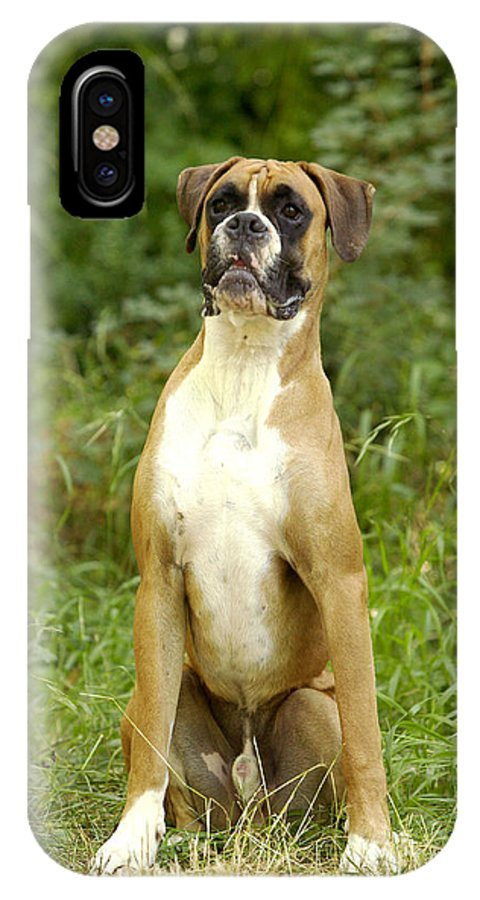 Boxer IPhone X / XS Case featuring the photograph Boxer Dog by Jean-Michel Labat