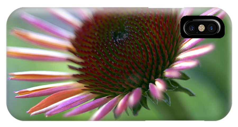 Genus Echinacea IPhone X Case featuring the photograph Coneflower by Tony Cordoza
