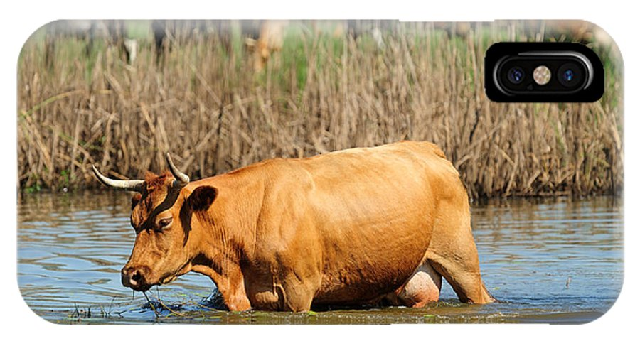 Animal IPhone X Case featuring the photograph Cow by Grisha Grigorov