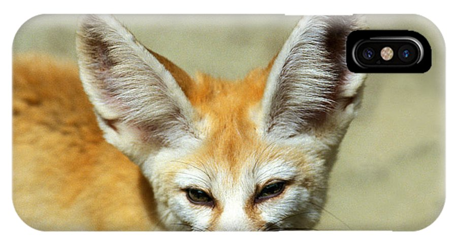 Adult IPhone X Case featuring the photograph Fennec Fennecus Zerda by Gerard Lacz