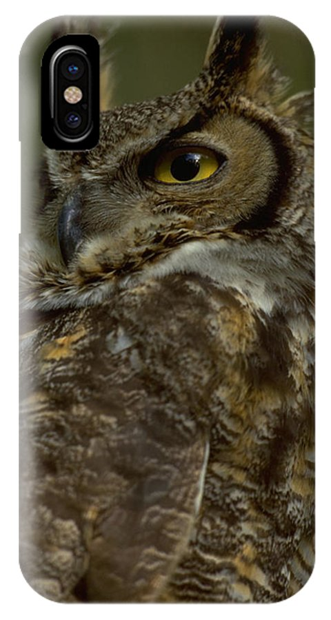 Animalia IPhone X Case featuring the photograph Great Horned Owl by Don Baccus