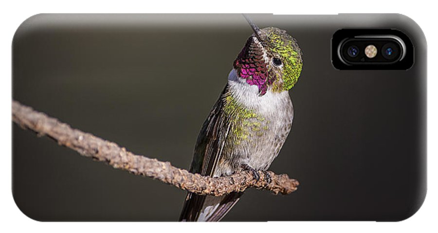 Hummingbird IPhone X Case featuring the photograph Hummingbird by Robert Monsipapa