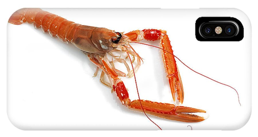 Animal IPhone X Case featuring the photograph Langoustine by Gerard Lacz
