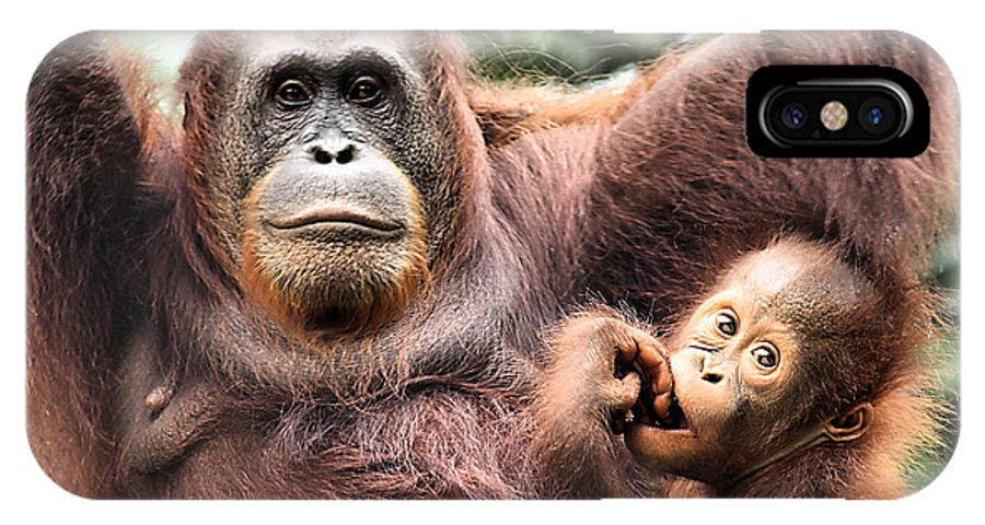 Orangutan IPhone X Case featuring the photograph Mother And Baby Orangutan Borneo by Carole-Anne Fooks