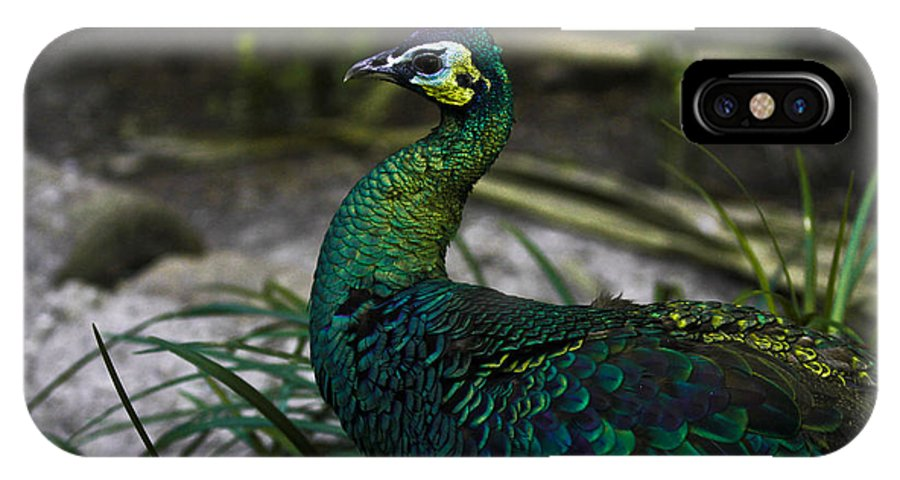 Peacock IPhone X Case featuring the photograph Peacock by Joel De la torre
